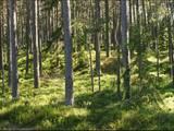 Лес,  Валка и р-он Лаункалнская вол., Фото