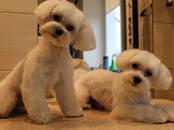 Собаки, щенки Услуги парикмахера, мойка, цена 13 €, Фото