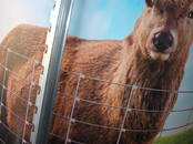 Животноводство,  Сельхоз животные Другое, цена 33 €, Фото