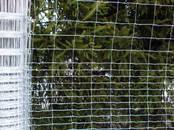 Животноводство,  Сельхоз животные Бараны, овцы, цена 33 €, Фото