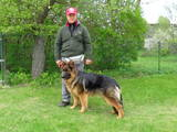 Suņi, kucēni Nodarbības, treniņi, cena 420 €, Foto