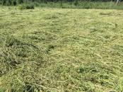 Животноводство,  Сельхоз животные Кролики, Нутрии, цена 5 €, Фото