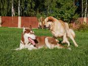 Собаки, щенки Занятия, тренировки, Фото