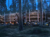Лес,  Лудза и р-он Мердзенская вол., Фото