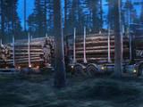 Лес,  Лудза и р-он Пуреньская вол., Фото