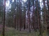 Лес,  Айзкраукле и р-он Иршская вол., Фото