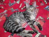 Kaķi, kaķēni Veterināra pakalpojumi, cena 10 €, Foto