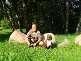 Собаки, щенки Занятия, тренировки, цена 420 €, Фото