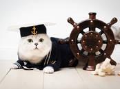 Кошки, котята Спаривание, цена 140 €, Фото
