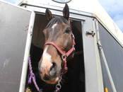 Lopkopība,  Lauksaimniecības dzīvnieki Zirgi, ēzeļi, citi, cena 25 €, Foto