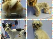 Suņi, kucēni Friziera pakalpojumi, mazgāšana, cena 15 €, Foto