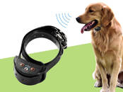 Suņi, kucēni Nodarbības, treniņi, cena 50 €, Foto