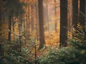 Mežs,  Cēsis un raj. Cits, Foto