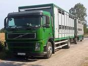 Lopkopība,  Lauksaimniecības dzīvnieki Cūkas, cena 0.10 €, Foto