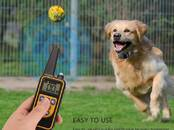 Собаки, щенки Занятия, тренировки, цена 59 €, Фото