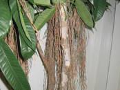 Mājas augi Mākslīgie augi, cena 132 €, Foto