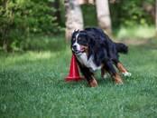 Suņi, kucēni Nodarbības, treniņi, Foto