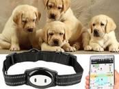 Suņi, kucēni Aksesuāri, cena 75 €, Foto
