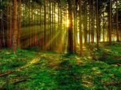 Mežs,  Rīgas rajons Salaspils l. t., Foto