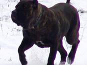 Suņi, kucēni Barība, cena 1.20 €, Foto