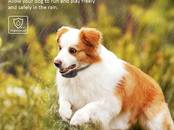Dogs, puppies Studies, trainings, price 45 €, Photo