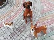 Suņi, kucēni Patversmes un viesnīcas, cena 15 €, Foto