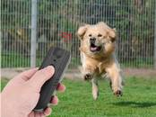 Собаки, щенки Аксессуары, цена 20 €, Фото