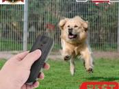 Suņi, kucēni Dažādi, cena 20 €, Foto