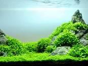 Zivtiņas, akvāriji Ūdens augi, cena 3 €, Foto