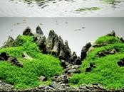 Рыбки, аквариумы Водные растения, цена 3 €, Фото