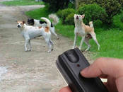 Suņi, kucēni Aksesuāri, cena 15 €, Foto