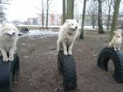 Собаки, щенки Занятия, тренировки, цена 10 €, Фото