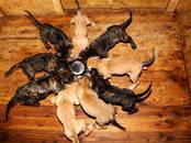 Собаки, щенки Корм, цена 1 €, Фото