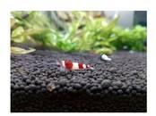 Рыбки, аквариумы Водные растения, цена 13.90 €, Фото