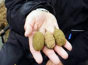 Охота, рыбалка,  Удочки и снасти Аксессуары, цена 7.50 €, Фото