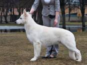 Собаки, щенки Услуги парикмахера, мойка, Фото
