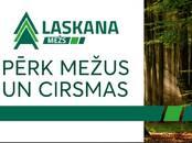 Mežs,  Bauska un raj. Bauska, cena 10 000 €, Foto