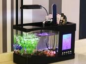 Fish, aquariums Aquariums and equipment, price 32.50 €, Photo