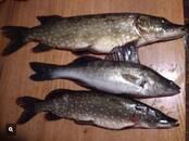 Охота, рыбалка,  Удочки и снасти Блёсны, приманки, цена 14 €, Фото