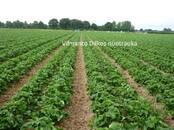 Lauksaimniecība Mēslojumi un ķimikālijas, cena 5 €, Foto