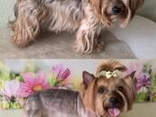 Собаки, щенки Услуги парикмахера, мойка, цена 15 €, Фото