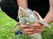 Охота, рыбалка Места для рыбалки, цена 3 €, Фото