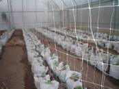 Aviculture Equipment for poultry farms, price 133 €, Photo