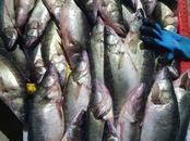 Foodstuffs Fish and fish products, price 5 €/kg., Photo
