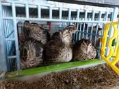 Птицеводство Куры, цена 5 €, Фото