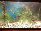 Рыбки, аквариумы Рыбки, цена 0.50 €, Фото