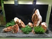 Рыбки, аквариумы Аквариумы и оборудование, цена 5.80 €, Фото