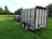 Животноводство,  Сельхоз животные Крупно-рогатый скот, цена 0.40 €, Фото