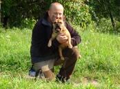 Suņi, kucēni Nodarbības, treniņi, cena 450 €, Foto