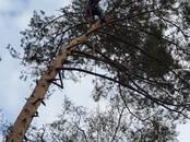 Meklē darbu (Darba meklēšana) Mežstrādnieks, Foto